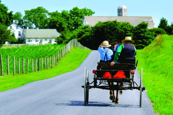 back-of-amish-buggy